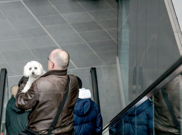 Rear view of man with dog on escalator at railroad station