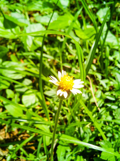 Weekend Green Color Flower Freshness Outdoors Flower Head Leaf Close-up No People Beauty In Nature Yellow Mobilephotography The Week on EyeEm Petal Nature Beauty In Nature Trivandram Varkala White Greenery