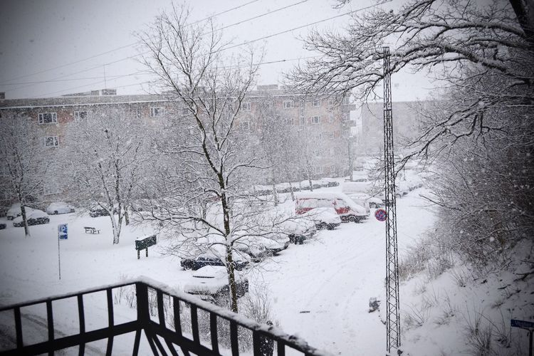 White Winter Snow Cold Winther Snowing