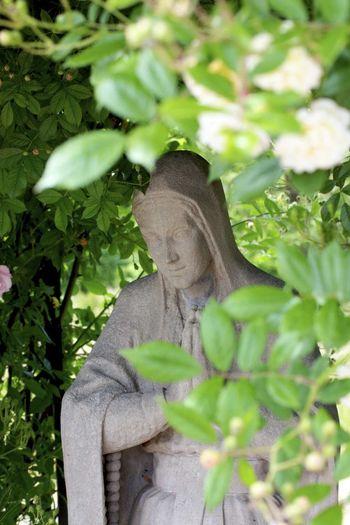 Maria magdalena statue amidst plants