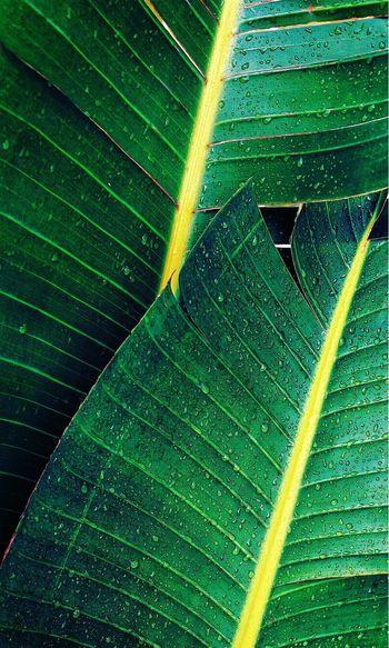 Leaf Leaf Full