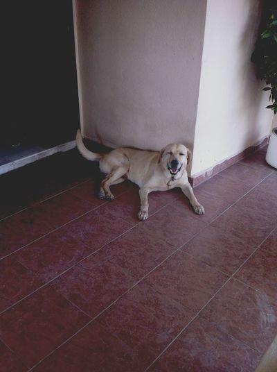 Happy kid. Labrador Sundaze