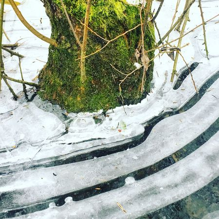 Frozen nature Winter Snow Cold Temperature Nature Outdoors Tree Moss No People Beauty In Nature Tranquility Frozen EyeEmNewHere EyeEmNewHere