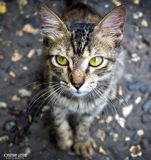 Cat Catlovers Catlover Catlover ♡ Modeling Like4like Instalike Animals Animales Muak Jlaphoto