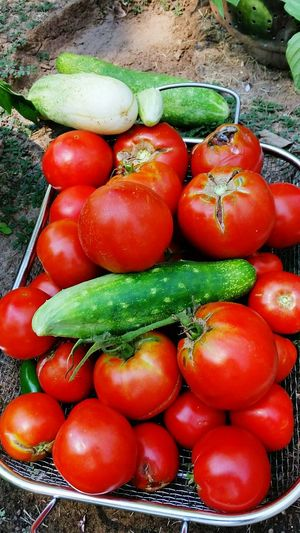 I love gardening and growing fresh vegetables! Those gorgeous red tomatoes get used all summer and the cucumbers are perfect with just a tad of salt. I love the freshness and uniqueness in every homegrown vegetable. Things I Like Homegrown Tomatoes Homegrown Cucumber Fresh Vegetables Gardening Nature Uniqueness Summerlovin Red