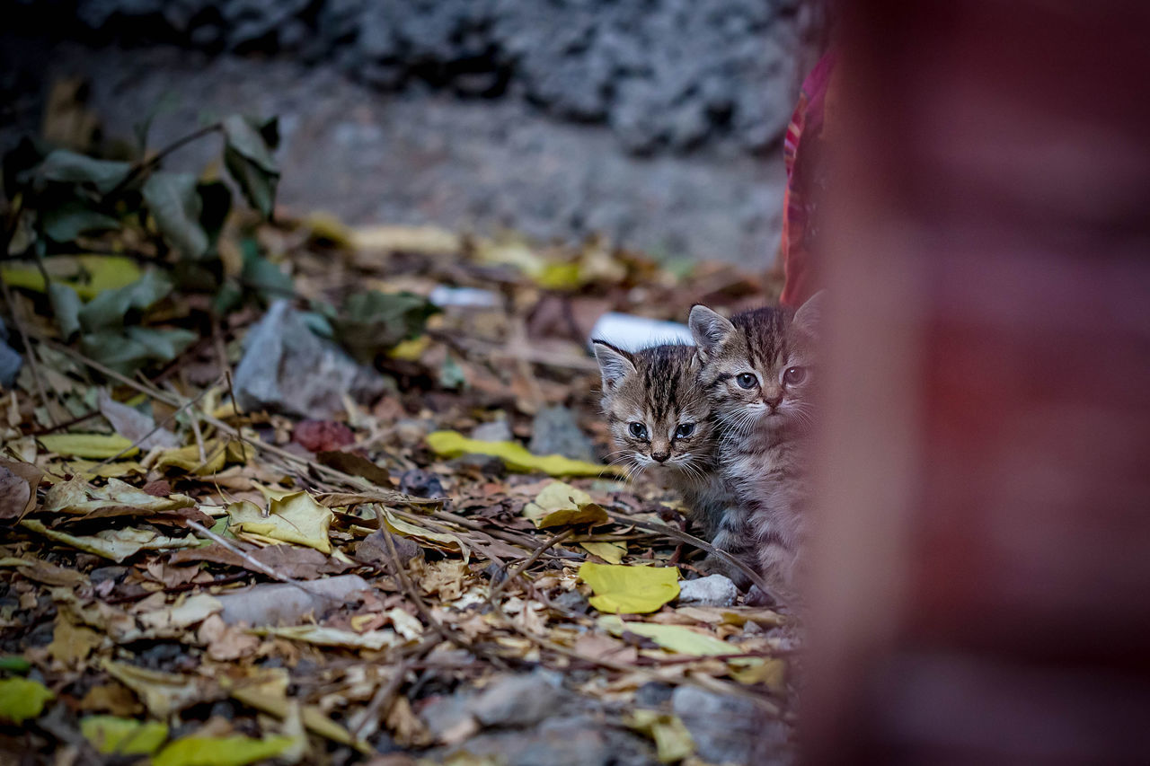 animal themes, one animal, mammal, animal, pets, selective focus, feline, domestic animals, cat, domestic, domestic cat, vertebrate, plant part, looking at camera, leaf, portrait, no people, day, nature, focus on background, whisker, leaves