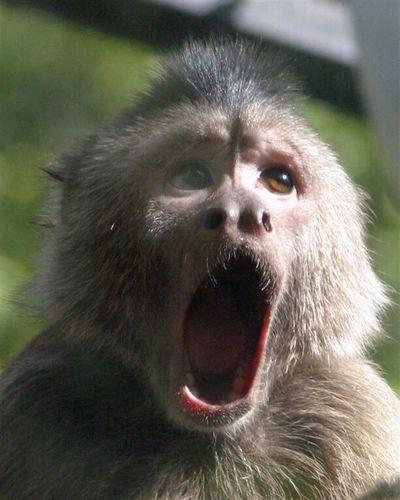 pretty monkey!