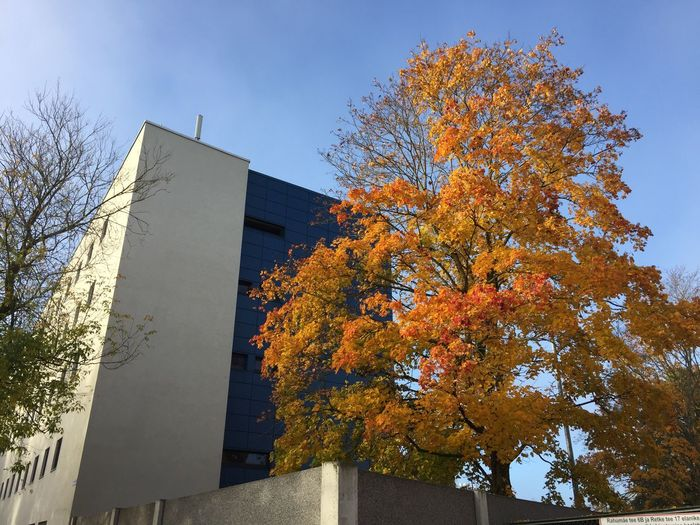 autumn in the city Autumn In The City Architecture Tree Plant Architecture Built Structure Building Exterior Sky Nature Building Sunlight Day Outdoors Autumn Clear Sky City Shadow Wall - Building Feature Growth No People