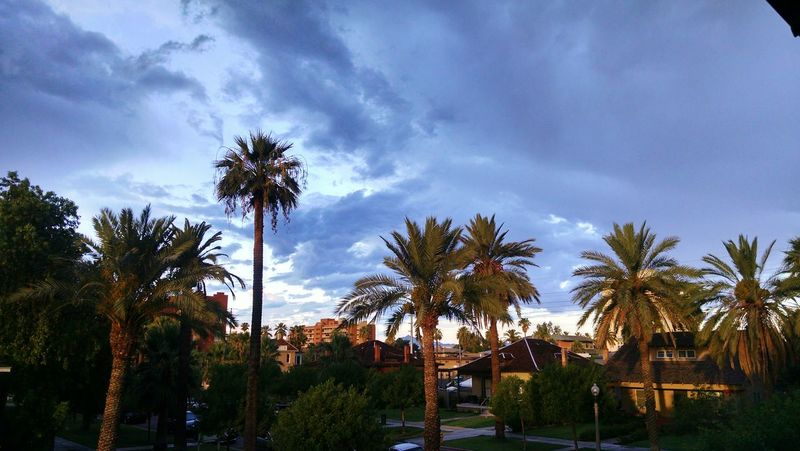 Palm Tree Tree Cloud - Sky Sky Day Outdoors No People Nature Streetside Phoenix, AZ Storm
