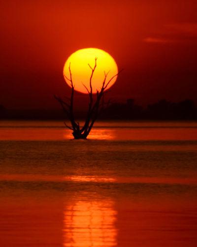 Silhouette plant against orange sky during sunset