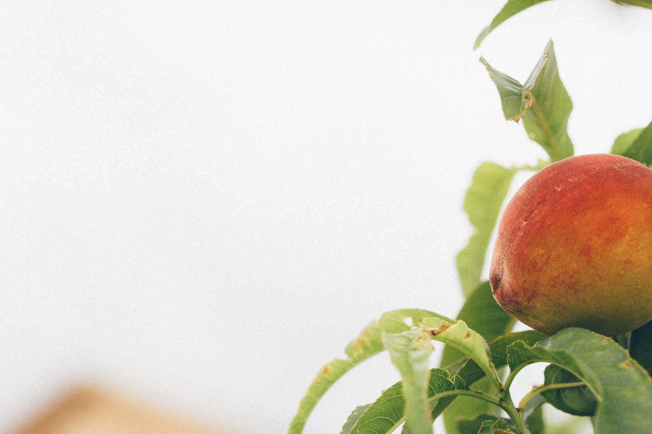 CLOSE-UP OF FRESH FRUIT AGAINST WHITE BACKGROUND
