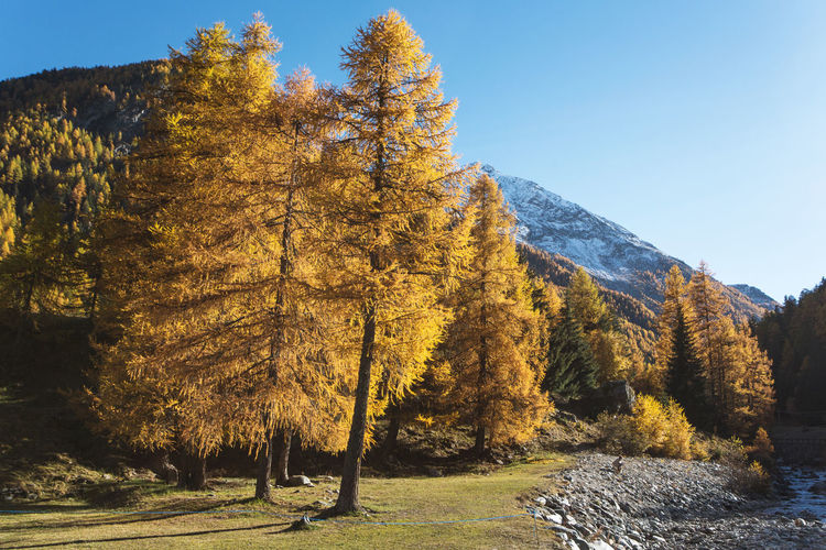 Tree Change Autumn Beauty In Nature Tranquility Growth Scenics - Nature Nature No People Non-urban Scene Day Land Sunlight Mountain Landscape Clear Sky Outdoors Autumn Collection Fall Wood Forest Forest Photography Mountain Forest Autumn colors Autumn