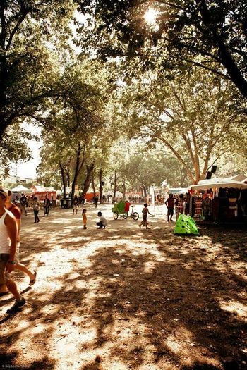 Tree Large Group Of People Sunlight Outdoors Shadow Growth Nature Real People City Day Sky People Adults Only Only Men Adult Mammal Reggae Festival Garance Reggae Song