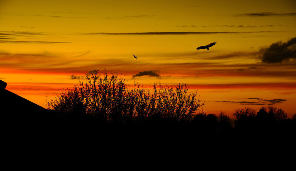 Sunset and flying Vultures Amazing Beauty In Nature Bird Birds Cloud - Sky Flying Nature Orange Orange Color Red Scenics Sky Summer Sunset Tranquil Scene Tree Vulture Vultures