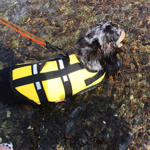 初めて の 海水浴 ♪ FamFamily cDachshund dMydog oIlovemydog oIlovemypet gDog aTravel cVacation クダックス チミニチュアダックス