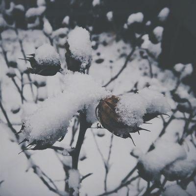 Snow Winter Februar Coolpic зимушка сніг❄ холодно❄бррр