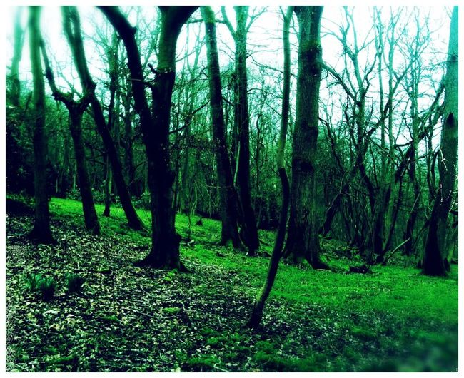 Nature | Woodlands • IPhoneography Mobile Photography Landscape EyeEm Nature Lover