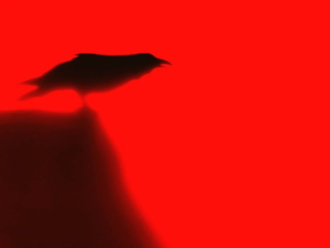 Fear Siniestro Oscuro Cuervo Fantasy Crow Darkart Mammal Animals In The Wild Shadow Bird Colored Background Abstract