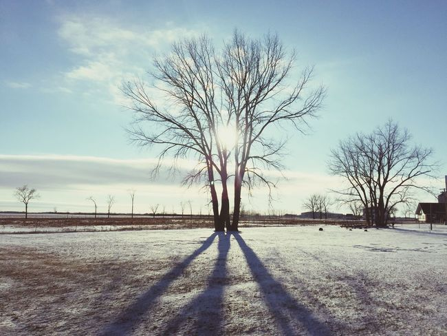 Bare Tree Tree Branch Lone Tranquility Landscape Tree Trunk Winter Tranquil Scene Outdoors Nature Cold Temperature Day Sky Beauty In Nature Snow No People OTTERBURNE Sunset Shades Of Winter