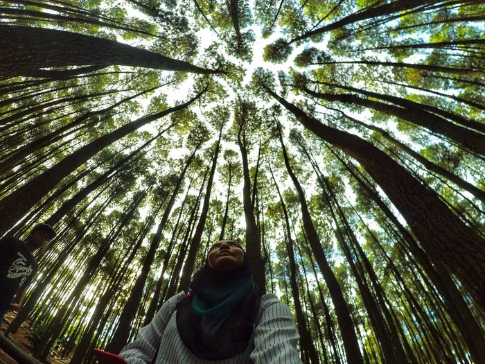 Low angle view of woman amidst trees in forest