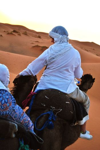 Camel Camel Trip Desert