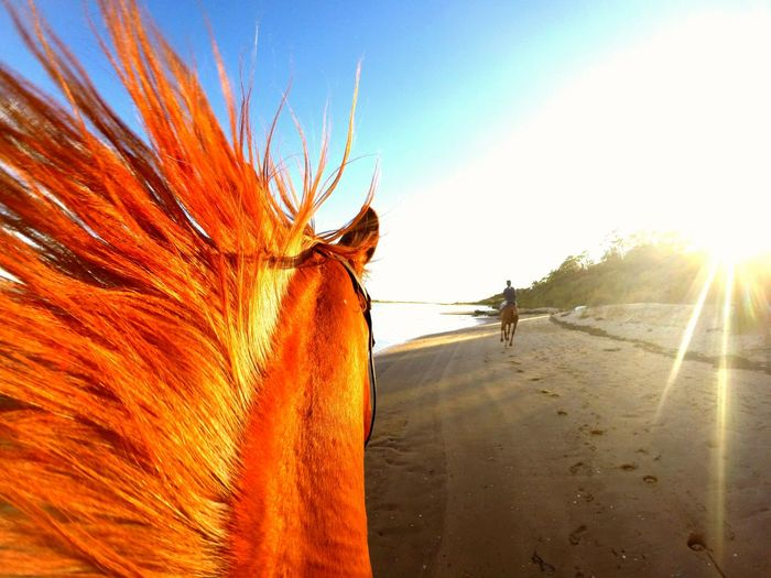 View of horse on beach at sunset