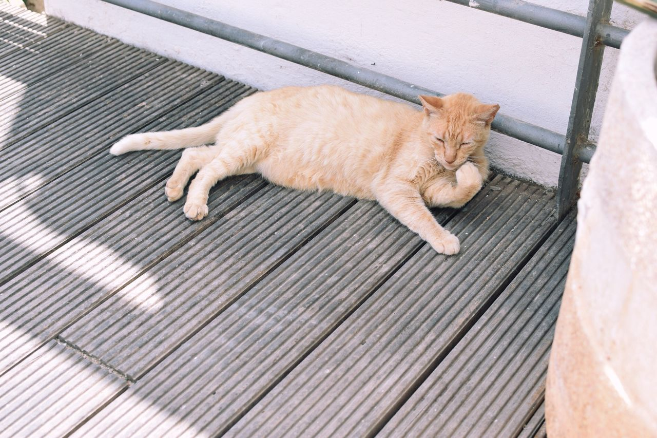 animal themes, animal, mammal, one animal, high angle view, domestic animals, domestic, pets, cat, domestic cat, relaxation, feline, vertebrate, sleeping, no people, lying down, resting, day, outdoors, full length, ginger cat, napping