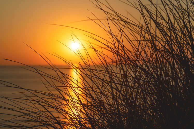 Beauty In Nature Grass Growth Idyllic Nature No People Non-urban Scene Orange Color Outdoors Plant Romantic Sky Scenics - Nature Silhouette Sky Stalk Sun Sunlight Sunset Timothy Grass Tranquil Scene Tranquility Water