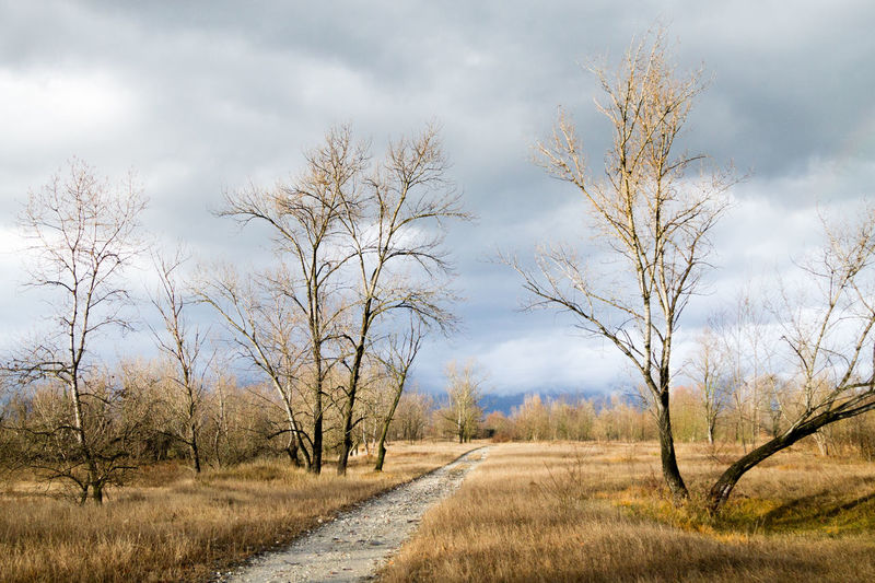 Road amidst bare trees on field against sky
