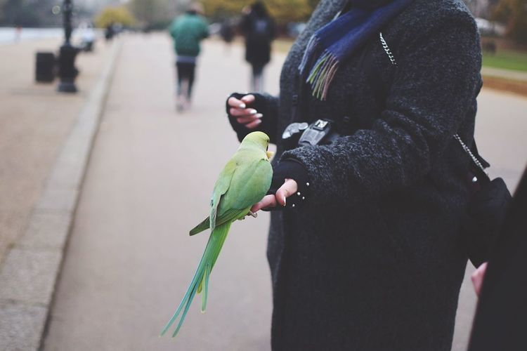 Hyde Park wonders. Real People Animals In The Wild One Animal Focus On Foreground Animal Wildlife Day Outdoors Men Bird Leisure Activity Perching Lifestyles Close-up Nature One Person People London Fashion Stories Adventures In The City A New Perspective On Life