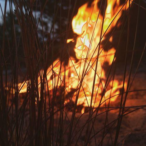 Vilkovo Night Fire