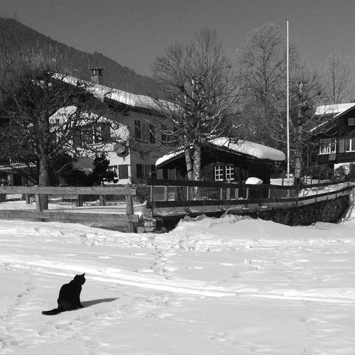A natural Silhouette :) Cat playing on the Snow near Skilift in Mauren , Lenk . Mobilnytydzien24 Lolcat