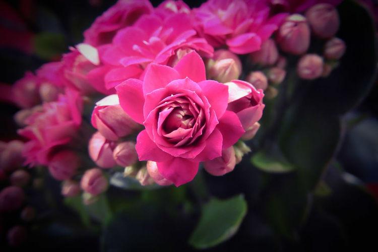 Macros Flower
