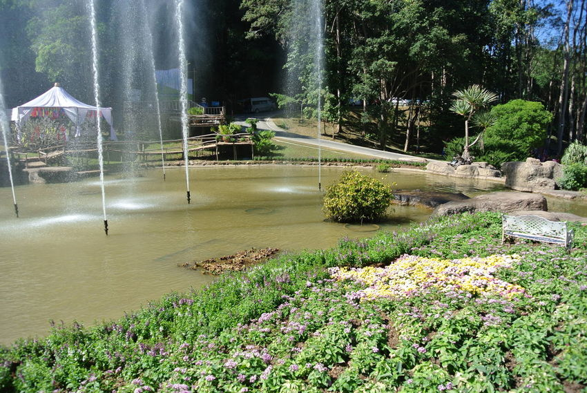 Fountain Water Nature Growth Outdoors Spraying Day No People Beauty In Nature Flower Sky Tree