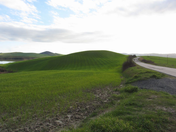 Country road over rolling green hills and valleys in winter . Tuscany, Italy Country Country Road Environmental Field Grass Green Hills Loneliness Panorama Pasture Tuscany Tuscany Countryside Winter Background Countryside Day Forest Grassland Infinity Italy Landscape Meadow Nobody Outdoors Valleys