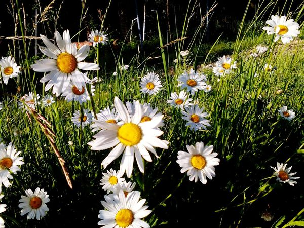 Summer ☀ Russian Beauty Peace✌ Beautiful Day Beautiful Nature Sunny Day Flowers Nature Beauty Is Everywhere