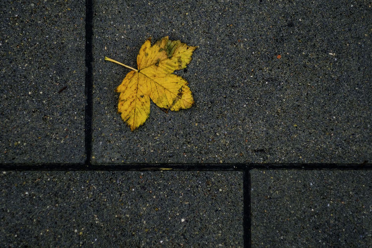 Fall is falling Asphalt Autumn Change Close-up Day Directly Above Fall Fall Colors Fallen Leaf Fragility High Angle View Leaf Leaves Maple Leaf Nature No People Outdoors Pavement Pavement Patterns Street Textured  Yellow