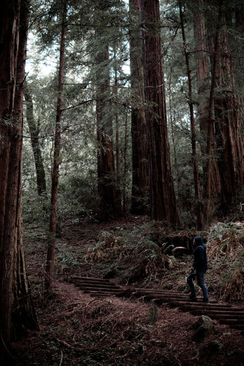 Beauty In Nature Day Forest Growth Human Hand Landscape Leisure Activity Lifestyles Men Nature One Man Only One Person Only Men Outdoors People Real People Tree Tree Trunk WoodLand