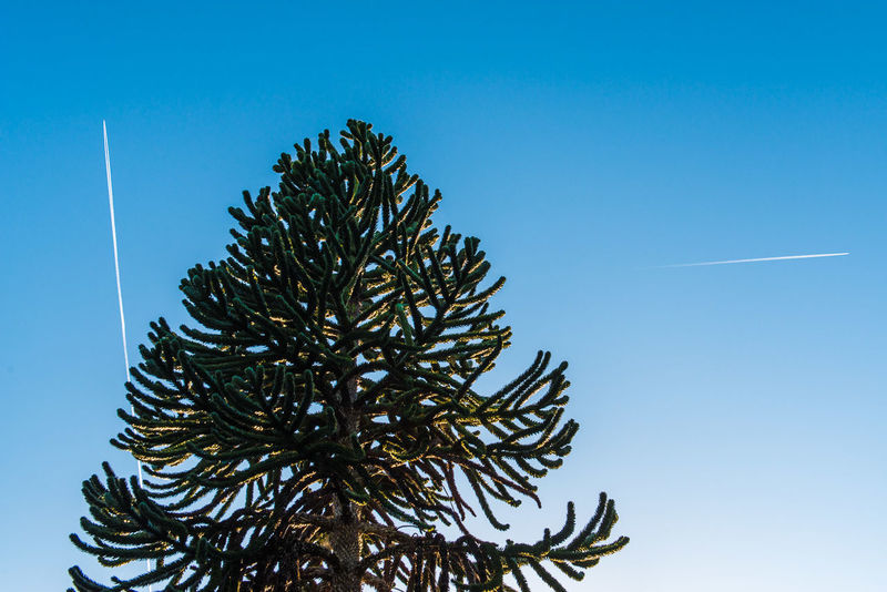 Blue Clear Sky Contrail Contrails Day Nature Outdoors Sky Tree
