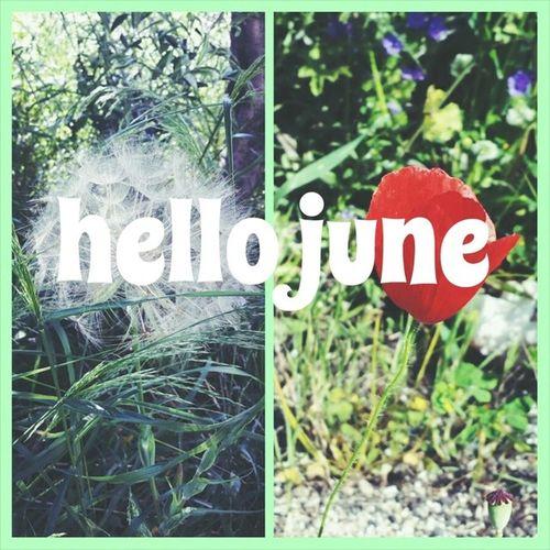 ?? Hellojune Summeriscoming Love Tuttomoltobello flowers