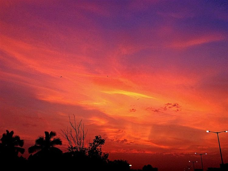 The colors of evening sky at Visakhapatnam Silhouette Sunset Tree Tranquil Scene Scenics Tranquility Beauty In Nature Majestic Awe Sky Dramatic Sky Atmosphere Outline Idyllic Orange Color Nature Cloud - Sky Atmospheric Mood Dark Cloud IPhoneography Iphone5s