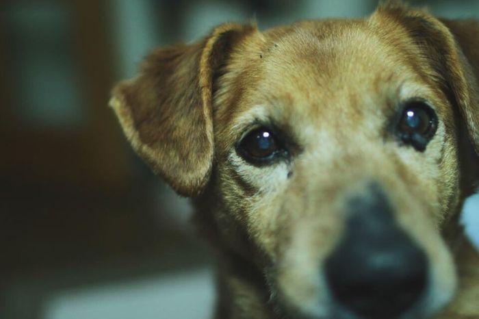 My Friend Photo Family Friend Dog (null)犬 可愛い 家族