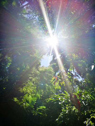 Beauty In Nature Brightly Lit Day Lens Flare Low Angle View Nature No People Outdoors Plant Sky Streaming Sun Sunbeam Sunlight Tranquility Tree