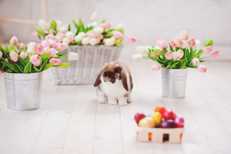 Easter Bunny  Easter Pets Flower Domestic Animals One Animal Animal Themes Mammal Indoors  No People Vase Freshness Dog Potted Plant Table Plant Fragility Day