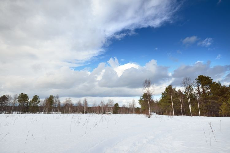 Panoramic shot of trees on snow covered field against sky