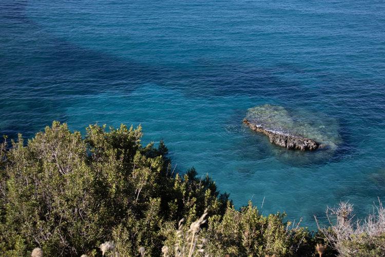 High angle view of plants and sea