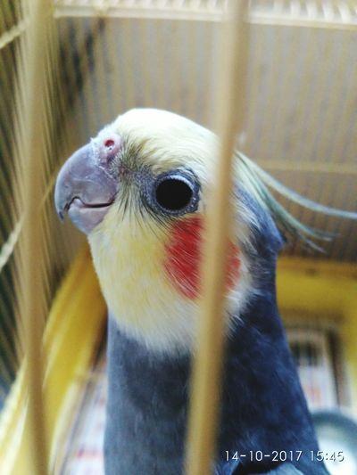 Bird Birdcage Close-up Pets Parrot No People