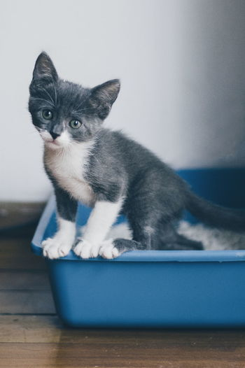 Close-Up Of Kitten On Blue Tub