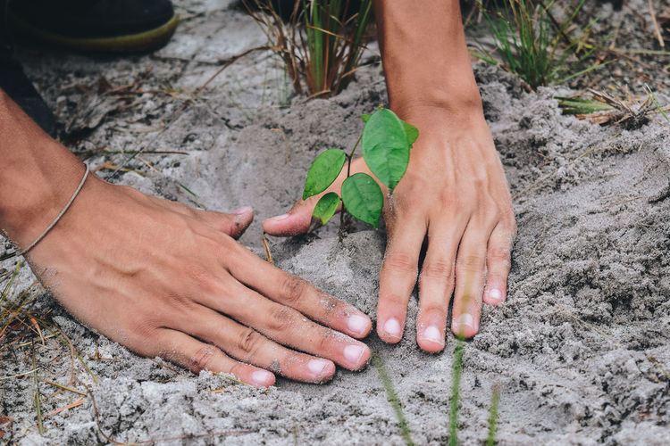 Young plant Body Part Care Day Finger Gardening Hand High Angle View Human Body Part Human Hand Leaf Men Nature Outdoors Plant Real People Young Plants
