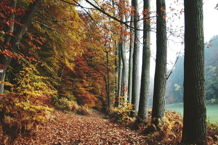 Leading Lines Autumn Autumn Colors Pastel Power Foggy Nature On Your Doorstep Wood Nature Photography Nature_collection Outdoor Photography Nature_perfection Evrything In Its Place White Wall The Beauty Of Fall Autumnbeauty Learn & Shoot: After Dark Autumn 2015 Autumn Collection Twillight Pattern Pieces Showcase: November Bruchmühlbach-Miesau Places You Must To See Seeing The Sights Colors Of Autumn